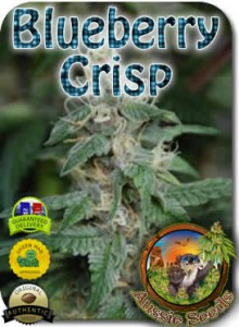 AU_Blueberry_Crisp_Seeds