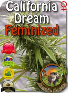 AU_California_Dream_Feminized_Seeds