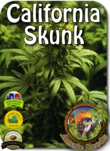 AU_Californian_Skunk_Seeds
