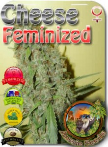 AU_Cheese_Feminized_Seeds