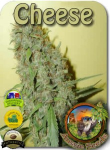 AU_Cheese_Seeds