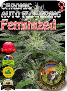 AU_Chronic_AUTO_Feminized_Seeds