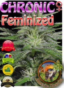 AU_Chronic_Feminized_Seeds