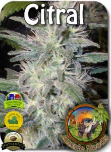 AU_Citral_Seeds