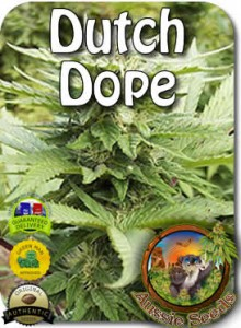 AU_Dutch_Dope_Seeds