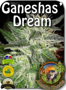AU_Ganeshas_Dream_Seeds