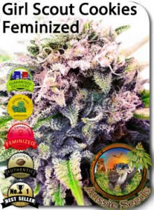 AU_Girl_Scout_CookiesFeminized