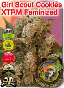 AU_Girl_Scout_Cookies_XTRM_Feminized