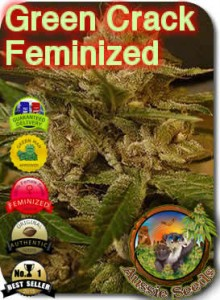 AU_Green_Crack_Feminized