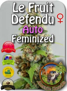 AU_Le_Fruit_Defendu_AUTO_Feminized_Seeds