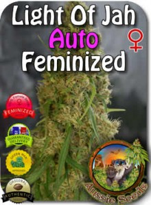 AU_Light_of_Jah_AUTO_Feminzed_Seeds