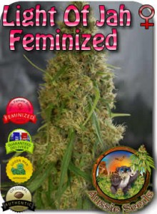 AU_Light_of_Jah_Feminzed_Seeds