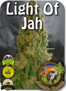 AU_Light_of_Jah_Seeds