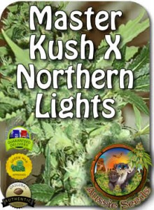 AU_Master_Kush_X_Northern_Lights_Seeds