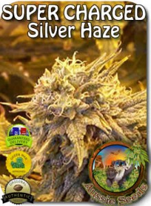 AU_New_Super_Silver_Haze_Seeds