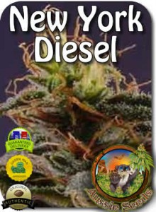 AU_New_York_Diesel_Seeds