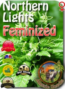AU_Northern_Lights_Feminized_Seeds