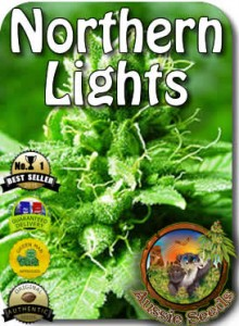 AU_Northern_Lights_Seeds