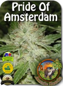 AU_Pride_of_Amsterdam_Seeds