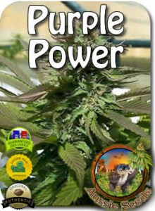 AU_Purple_Power_Seeds