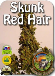 AU_Skunk_Red_Hair_Seeds