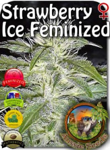 AU_Strawberry_Ice_Feminized_Seeds