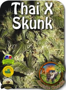 AU_Thai_X_Skunk_Seeds
