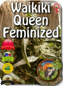 AU_Waikiki_Queen_Feminized_Seeds