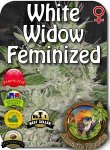 AU_White_Widow_Feminized_Seeds