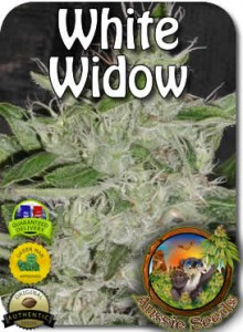 AU_White_Widow_Seeds